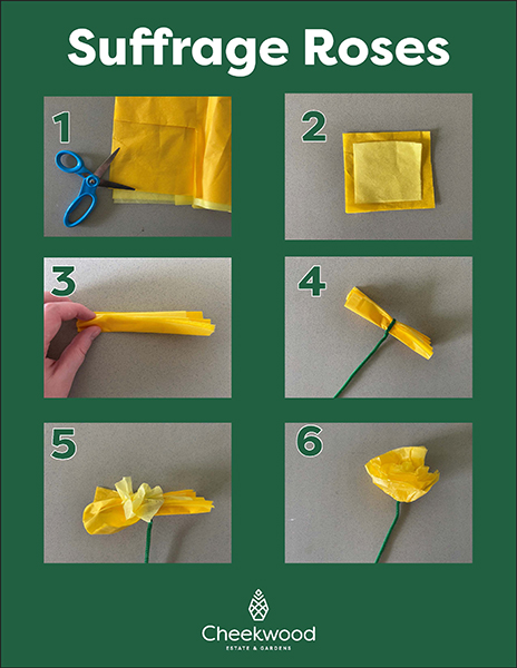 Suffrage Roses Virtual Tots! Activity