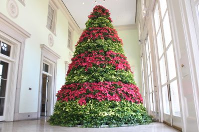 The Poinsettia Tree at Cheekwood